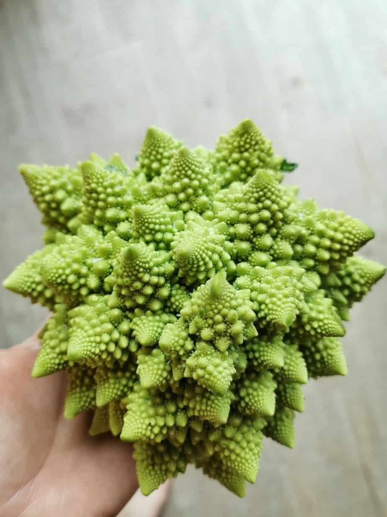 Romanesco groente broccoli bloemkool